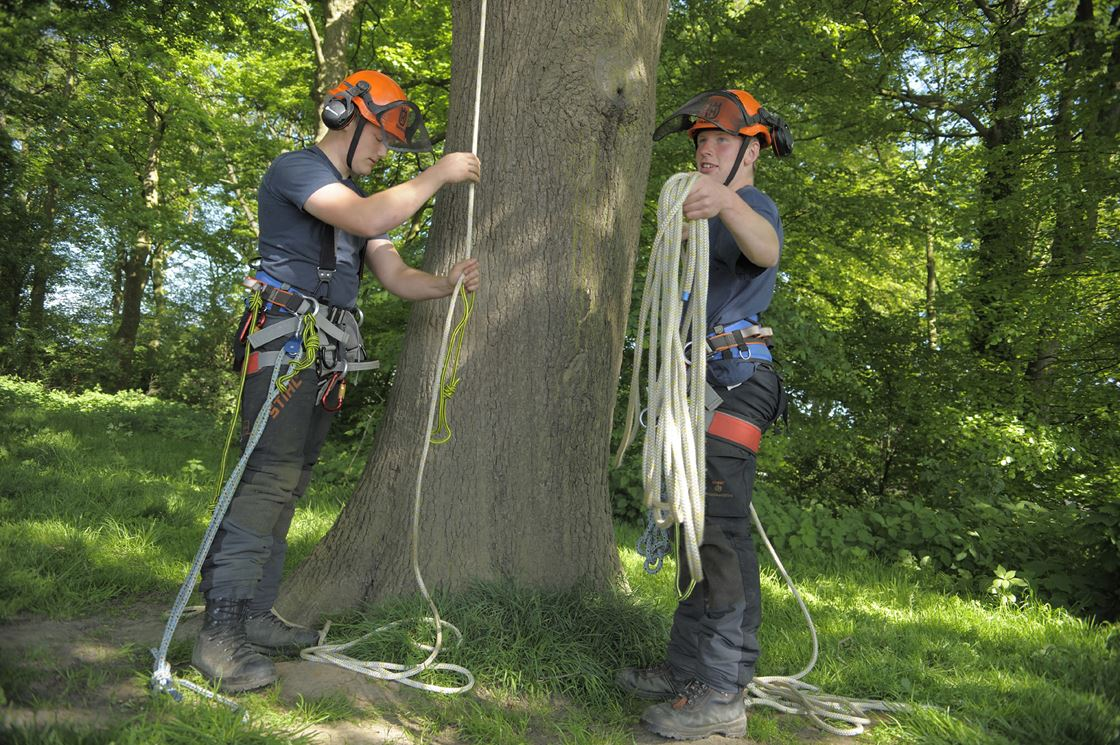 Level 2 Certificate Arboriculture On Line Myerscough College