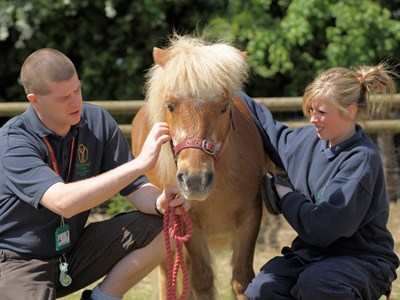 Students with one of the College ponies