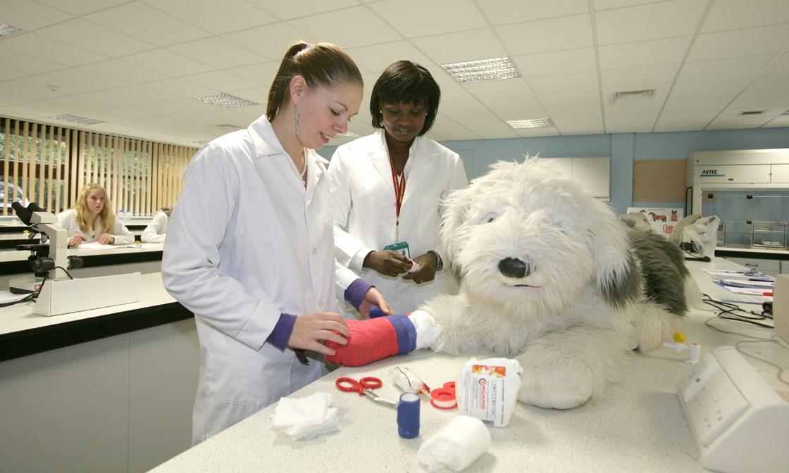 Veterinary nurse coursework help?