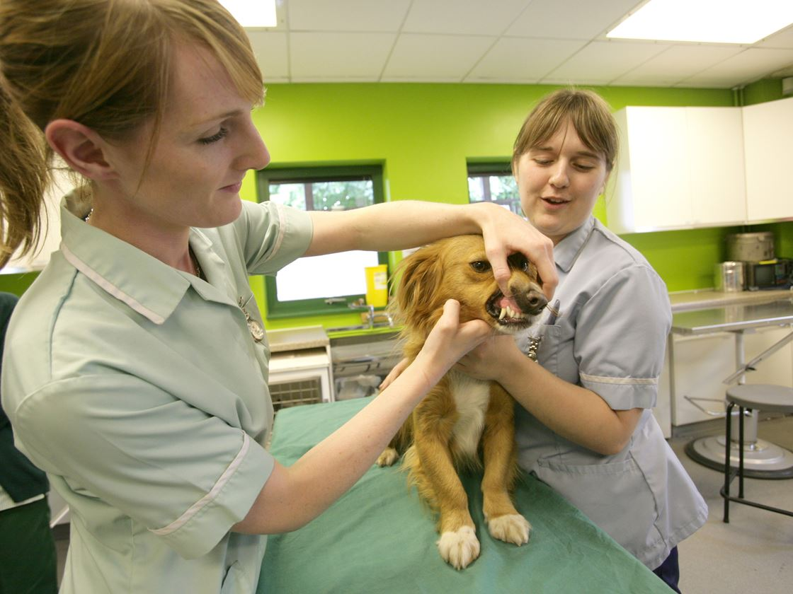 Diploma HE Clinical Veterinary Nursing | Myerscough College