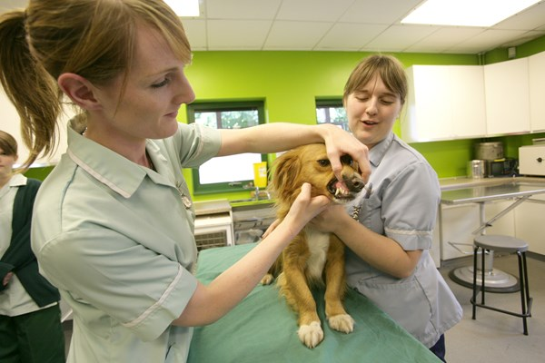 Myerscough College - Veterinary Nursing Courses