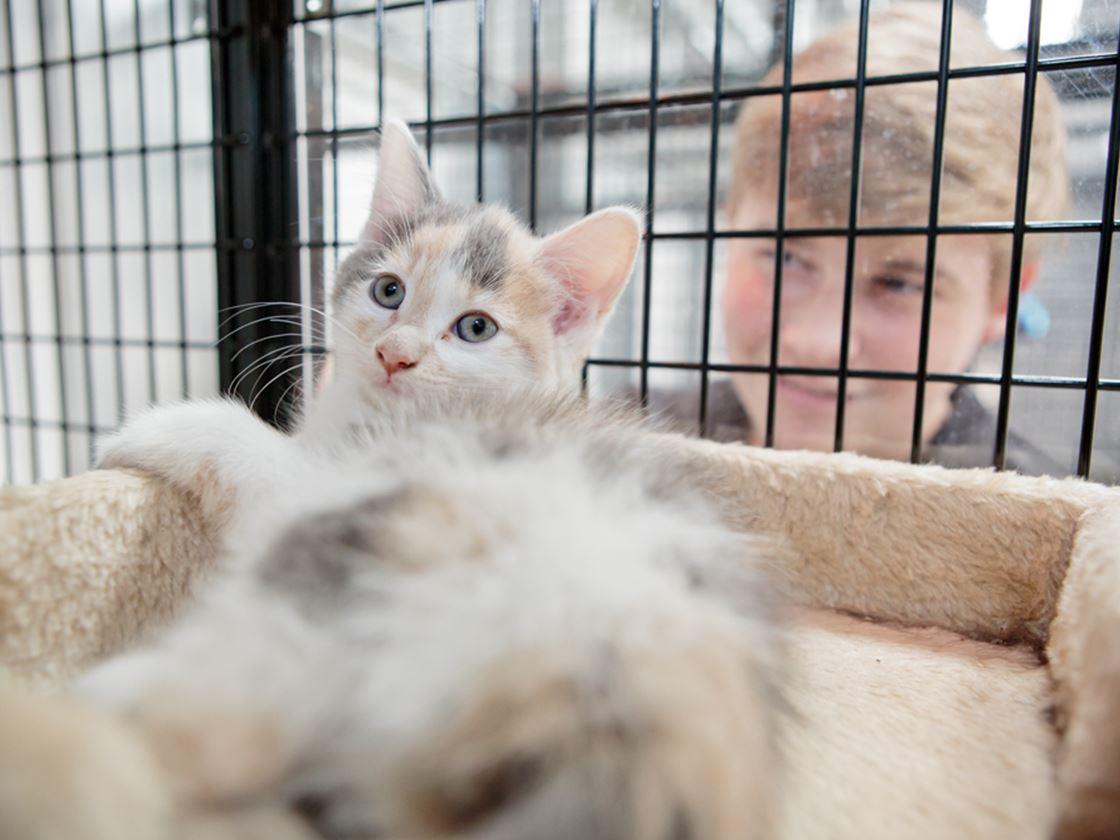 Animal Studies | Myerscough College