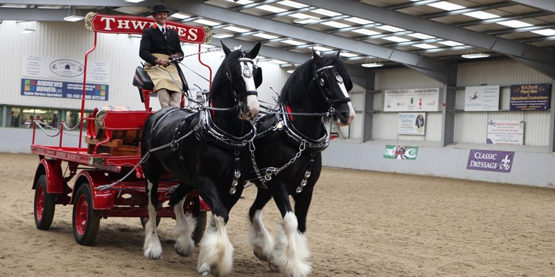 Equine2-Shire Horses.jpg