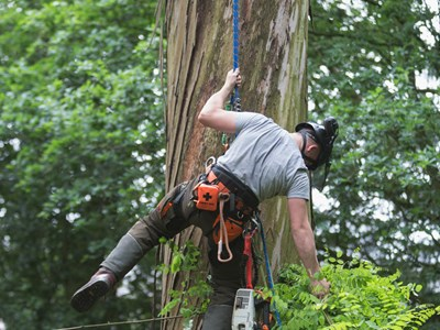 arboriculture, tree, surgeon, veterans, armed forces, courses