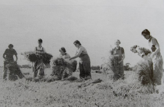 WOMEN'S LAND ARMY AT HUTTON DURING WW2.jpg