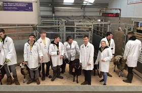 Foundation learners go baa-rmy at Auction Mart experience