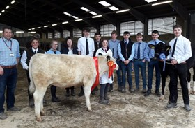 Agriculture's moo-vellous Christmas Calf Show